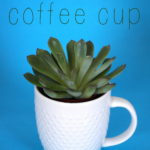 {Tutorial} Succulents in a Coffee Cup