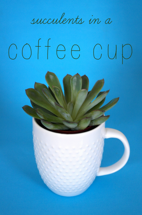 succulents in a coffee cup