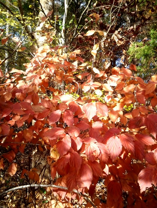 Leaves taken with Samsung Galaxy Tab 3 #shop