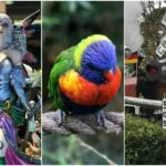 Busch Gardens Williamsburg Favorites
