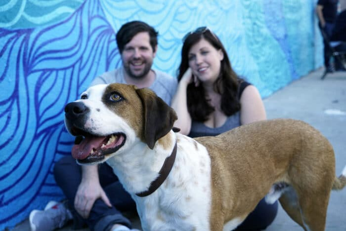 "Downward Dog Isn't Your Typical ""Talking Animal"" Show"